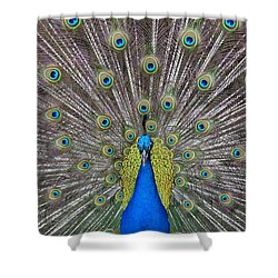 Pretty Peacock Shower Curtain