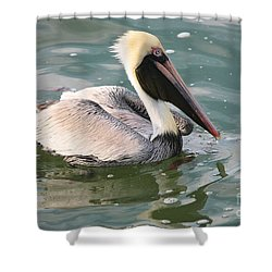 Pretty Pelican In Pond Shower Curtain by Carol Groenen