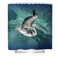 Shower Curtain featuring the photograph Pretty Pelican by Pennie  McCracken
