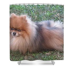 Pretty Pom Shower Curtain