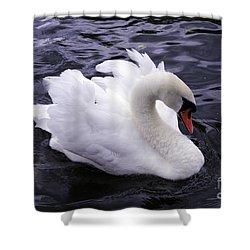 Pretty Swan Shower Curtain