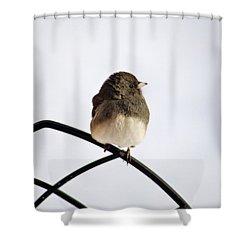 Pretty Winter Junco Shower Curtain by Christina Rollo