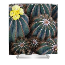 Shower Curtain featuring the photograph Prickly Beauties by Evelyn Tambour