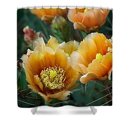 Prickly Pear Cactus Shower Curtain by Mary Lee Dereske