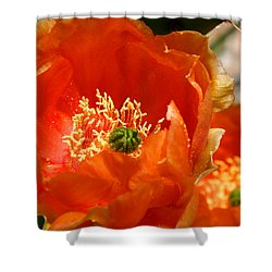 Prickly Pear In Bloom Shower Curtain