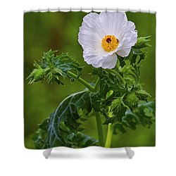 Prickly Poppy Shower Curtain