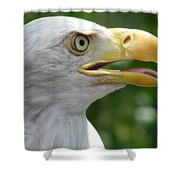 Pride Shower Curtain by Randy J Heath