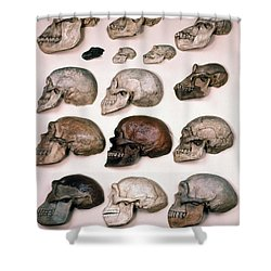 Primate Skulls Apes And Humans Shower Curtain by E R Degginger