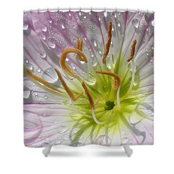 Primrose Shower Curtain