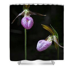 Prince Edward Island Lady Slippers Shower Curtain by Verena Matthew