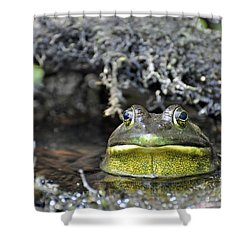 Shower Curtain featuring the photograph Bullfrog by Glenn Gordon