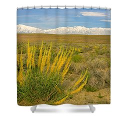 Princes Plume And Mount Tom - Spring Wildflowers Owens Valley Eastern Sierra California Shower Curtain