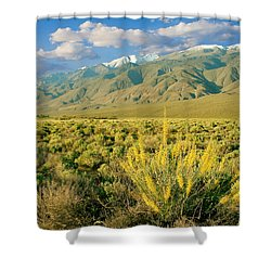 Princes Plume And White Mountains - Owens Valley California Shower Curtain