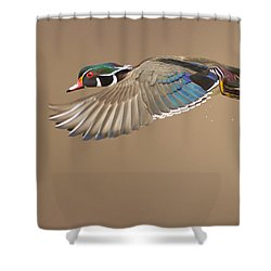 Probably The Most Beautiful Of All Duck Species Shower Curtain