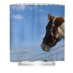 Shower Curtain featuring the photograph Profile Of A Horse by Charles Beeler