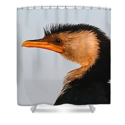 Profile Of A Young Cormorant Shower Curtain