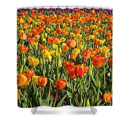 Profusion Of Tulips Biltmore Estate Nc Shower Curtain