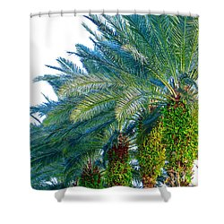 Progression Of Palms Shower Curtain