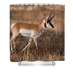 Pronghorn Antelope 2 Shower Curtain by Vivian Christopher