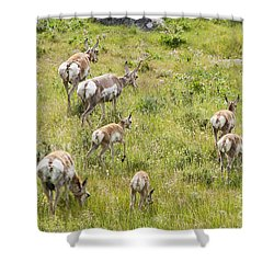 Shower Curtain featuring the photograph Pronghorn Antelope In Lamar Valley by Belinda Greb