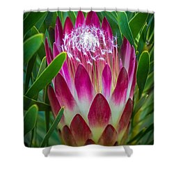 Shower Curtain featuring the photograph Protea In Pink by Kate Brown
