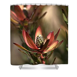 Protea  Shower Curtain by Joy Watson