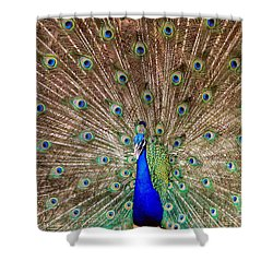 Shower Curtain featuring the photograph Proud Peacock by Geraldine DeBoer