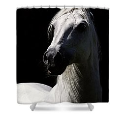 Proud Stallion Shower Curtain