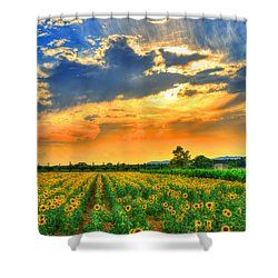 Provence Lights Shower Curtain by Midori Chan