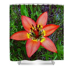 Shower Curtain featuring the photograph Prairie Lily - Lilium Philadelphicum by Blair Wainman