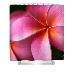 Shower Curtain featuring the photograph Pua Lei Aloha Cherished Blossom Pink Tropical Plumeria Hina Ma Lai Lena O Hawaii by Sharon Mau