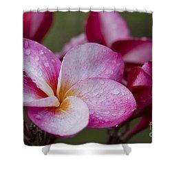 Pua Melia Floral Celebration Shower Curtain by Sharon Mau