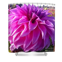 Puff Of Pink Dahlia Shower Curtain by Susan Garren