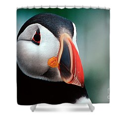Puffin Head Shot Shower Curtain by Jerry Fornarotto