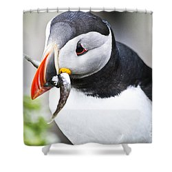 Puffin With Fish Shower Curtain by Heiko Koehrer-Wagner