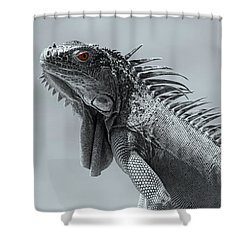 Shower Curtain featuring the photograph Pugnacious by Patrick Witz