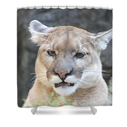 Shower Curtain featuring the photograph Puma Head Shot by John Telfer