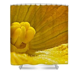 Shower Curtain featuring the photograph Pumpkin Blossom by Linda Bianic