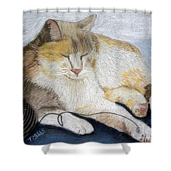 Pumpkin Patch - Calico Cat Shower Curtain