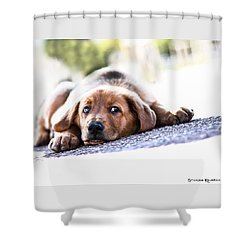 Shower Curtain featuring the photograph Puppet Dog by Stwayne Keubrick