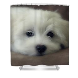 Puppy Eyes Shower Curtain by Melanie Lankford Photography