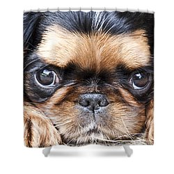 Puppy Love Shower Curtain by Jeannette Hunt