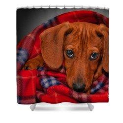 Puppy Love Shower Curtain by Susan Candelario