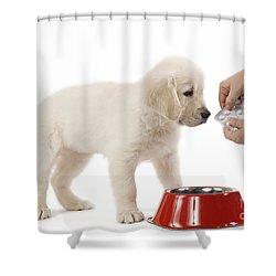 Puppy Receiving Medicine Shower Curtain by Jean-Michel Labat