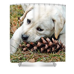 Puppy With Pine Cone Shower Curtain by Lisa Phillips