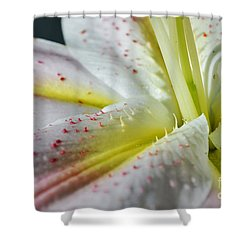 Pure And Fragrant Shower Curtain by Felicia Tica