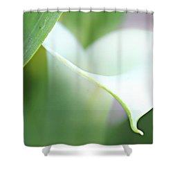 Pure Heart Shower Curtain by Kume Bryant