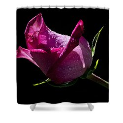 Shower Curtain featuring the photograph Pure Pink by Doug Norkum