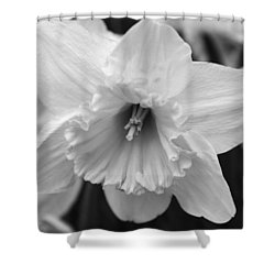 Shower Curtain featuring the photograph Pure Spring by Arlene Carmel