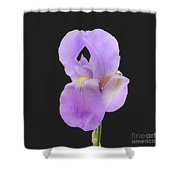 Purple Iris Shower Curtain by Scott Cameron
